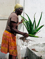 Edna on San Salvador Island with aloe plant